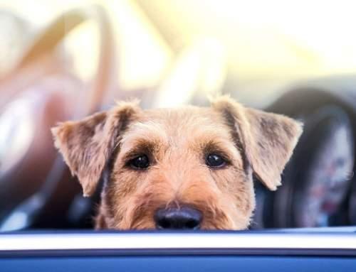 Die 5 Gefahren beim Autofahren im Sommer